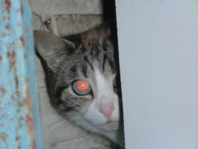 Photos des chats sauvés, avant/après - Page 3 Minus311