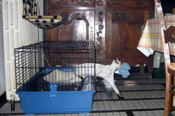 Cage de socio : prison ou refuge ? Nid_ca10