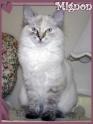 La devinette du mois : Quelle est la robe de ce chat ? - Page 2 Seal_p10