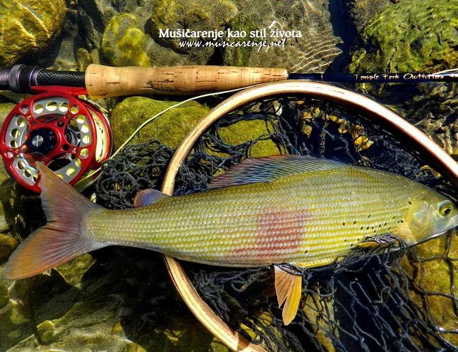 Fotografije ulova, ribe, oprema i dr. - Page 33 Dscn9516