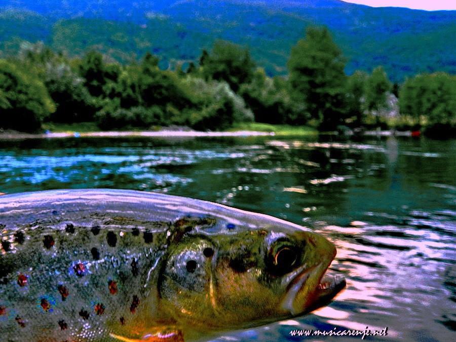 Fotografije ulova, ribe, oprema i dr. - Page 33 Mjk10