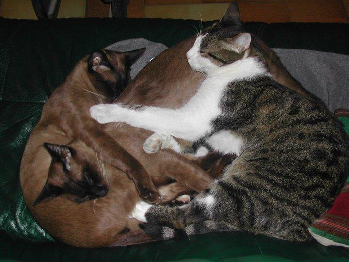 Comment alimenter un chat en IRC lorsque 3 matous vivent sous le même toit 39357_10