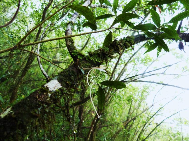 Week end pluvieux à La Réunion 012112