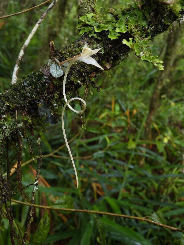 Week end pluvieux à La Réunion 021111