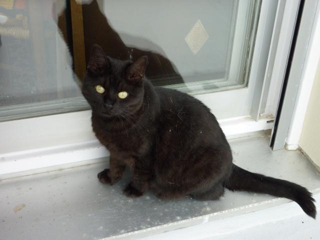 CAPSULE chatte noire de 7 ans 2009_010
