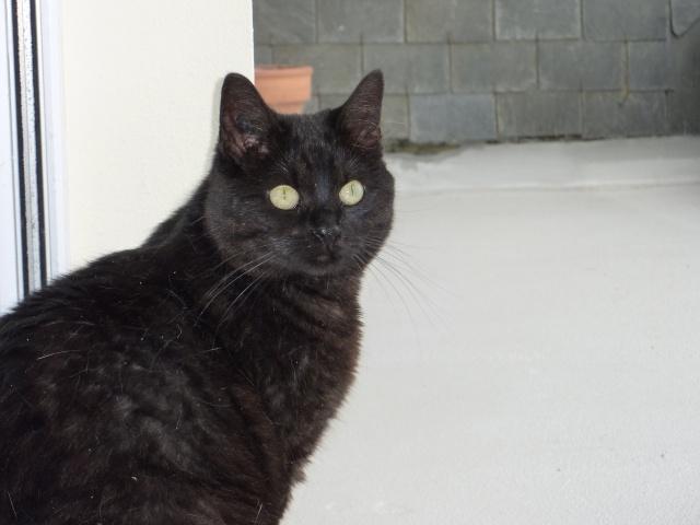CAPSULE chatte noire de 7 ans 2009_011