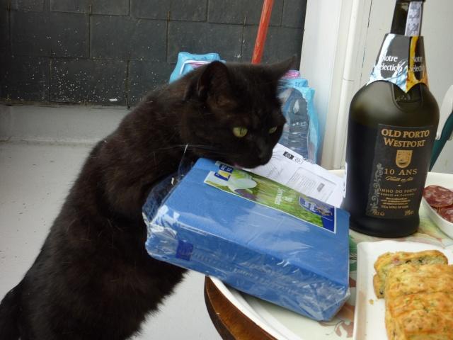 CAPSULE chatte noire de 7 ans 2009_013