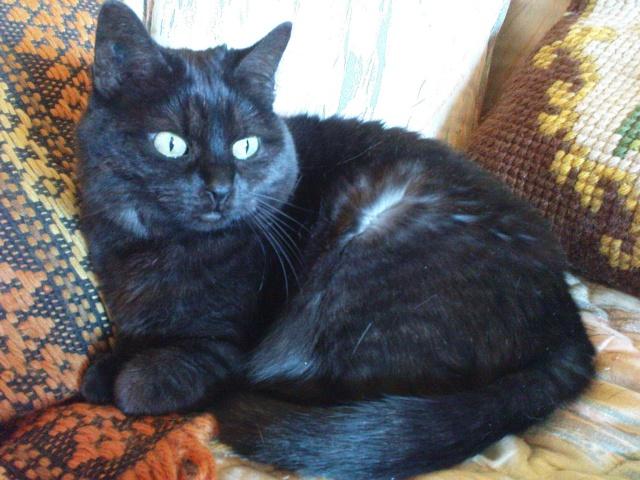 CAPSULE chatte noire de 7 ans Dsc03411