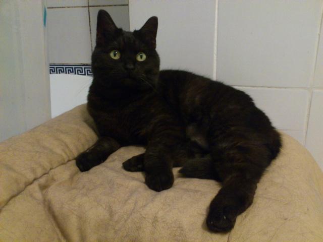 CAPSULE chatte noire de 7 ans Dsc_1811