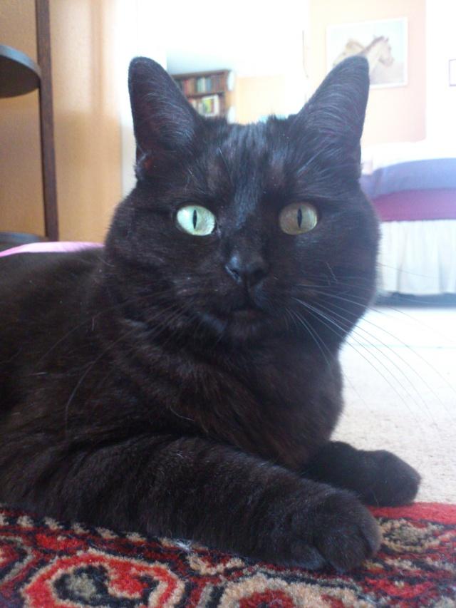 CAPSULE chatte noire de 7 ans Dsc_4810