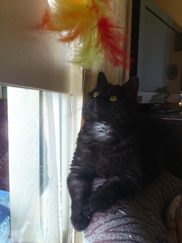 CAPSULE chatte noire de 7 ans Dsc_4811