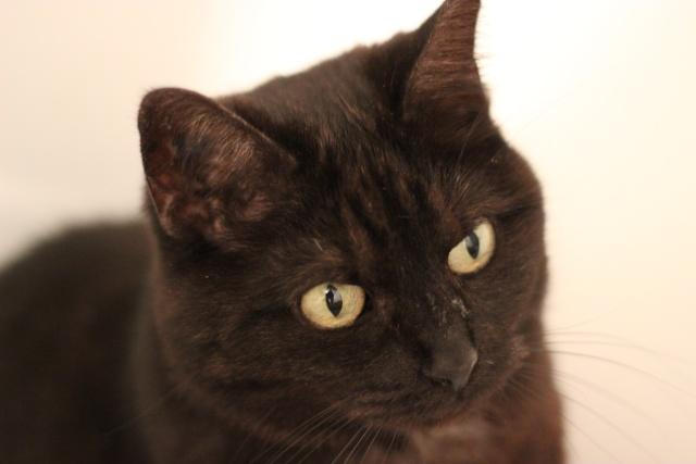 CAPSULE chatte noire de 7 ans Img_2013
