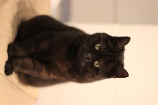 CAPSULE chatte noire de 7 ans Img_2014