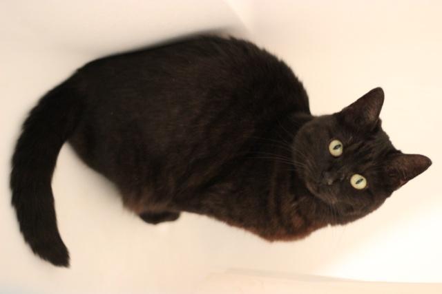 CAPSULE chatte noire de 7 ans Img_2015