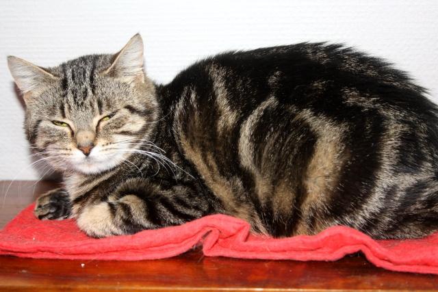 CHOUKY - Tigrée - Née le 24/05/2011 - En FA dans le 02 Img_7312