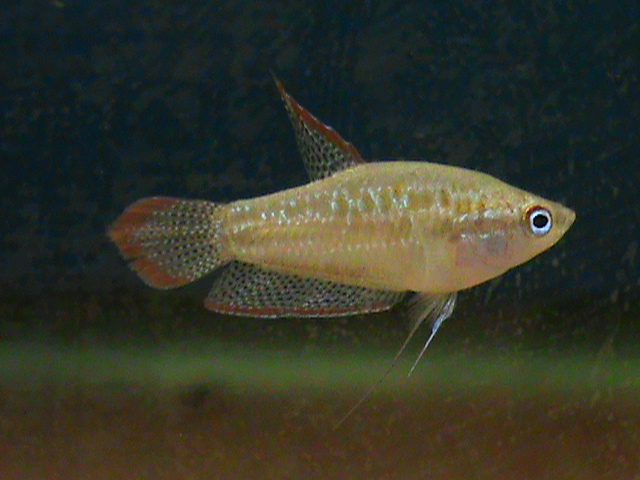First fish pictures Fish11