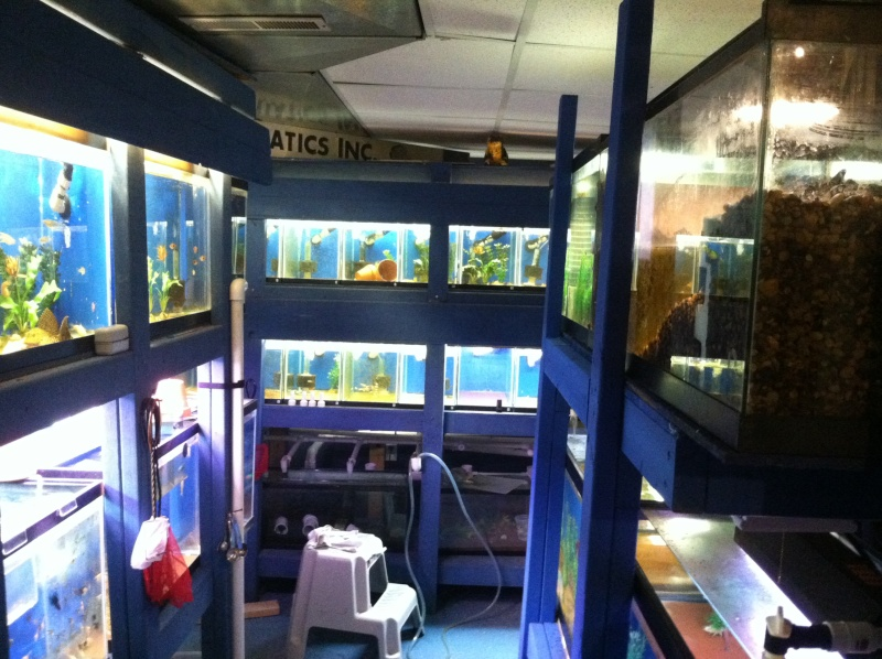Picture of fishroom Photo11