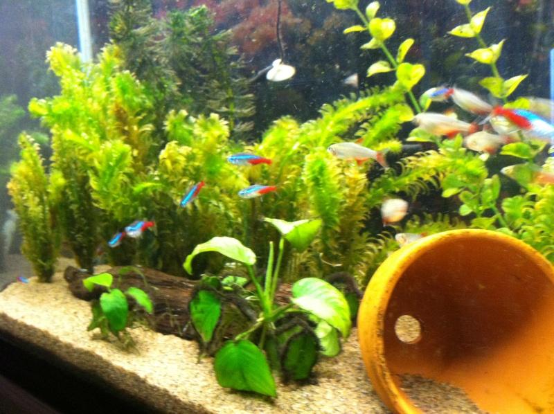New live plant tank Photo12