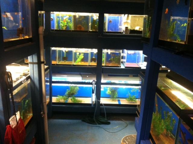 New Tanks in Fishroom Photo14