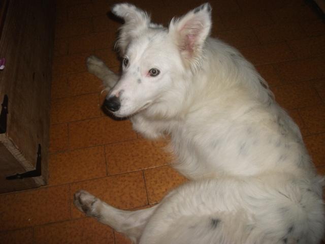 Taz, croisé border collie né le 01/05/2012 ( Adopté dans le (80) ) Dscf4118