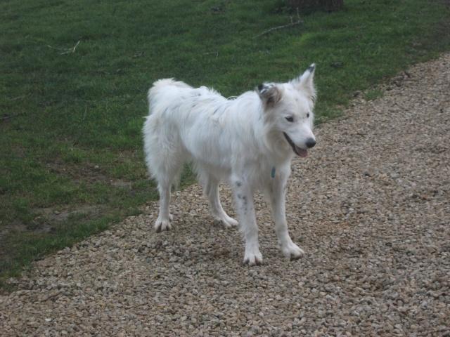 Taz, croisé border collie né le 01/05/2012 ( Adopté dans le (80) ) Dscf4313