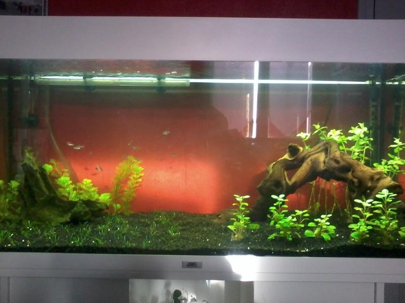 Besoin de conseil aquarium rio 180 20140210