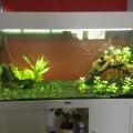 Besoin de conseil aquarium rio 180 30c1c410