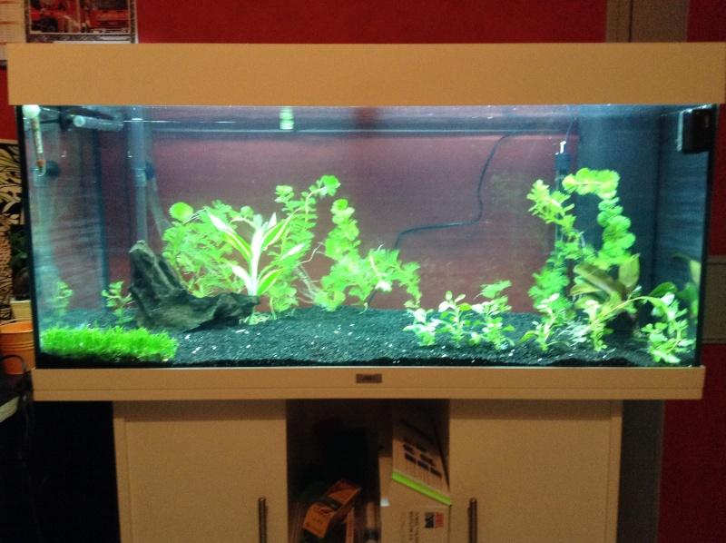 Besoin de conseil aquarium rio 180 Img_0516
