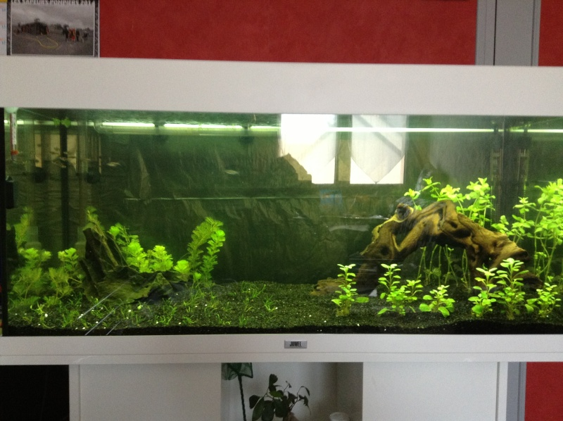 Besoin de conseil aquarium rio 180 Img_0517