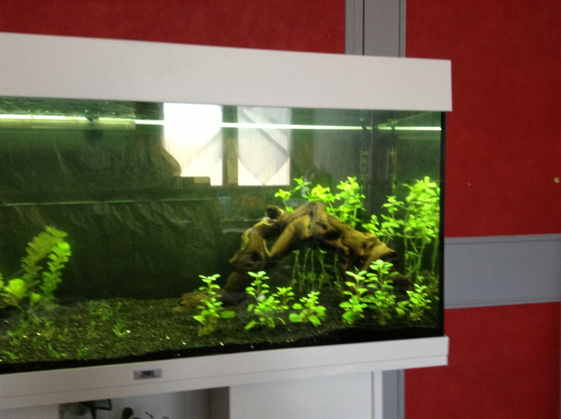 Besoin de conseil aquarium rio 180 Img_0518
