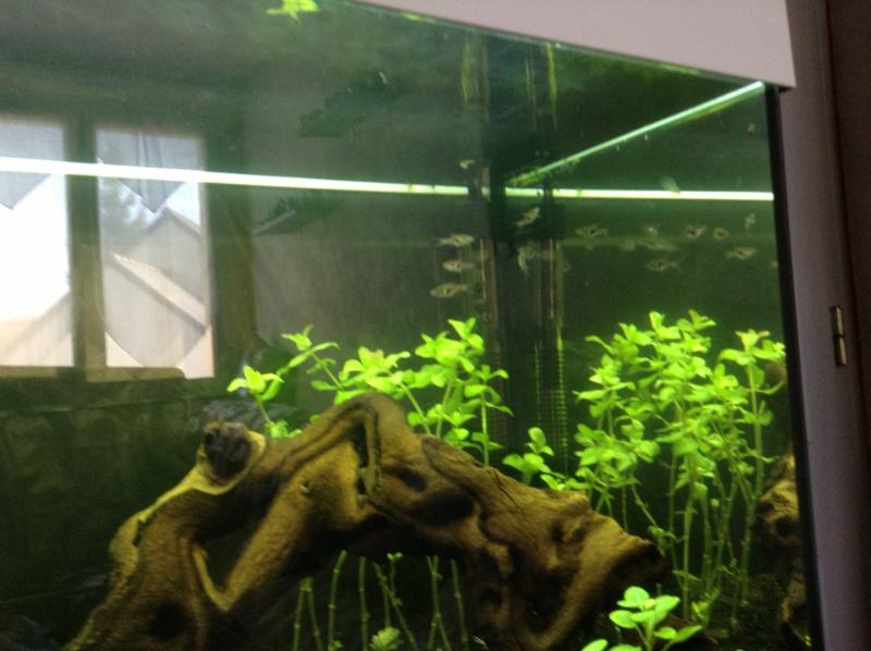 Besoin de conseil aquarium rio 180 Img_0610