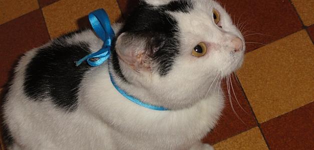 Appel aux dons pour Finette, petite minette qui doit se faire amputer d'une oreille... Timthu10
