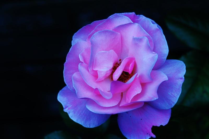 Fleur d'un autre monde Img_0010