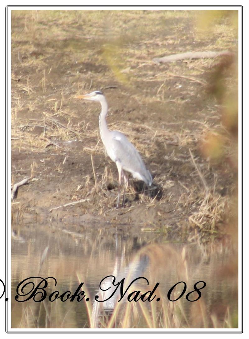 les oiseaux et petites bêtes au cours de nos balades - Page 2 Cadre224