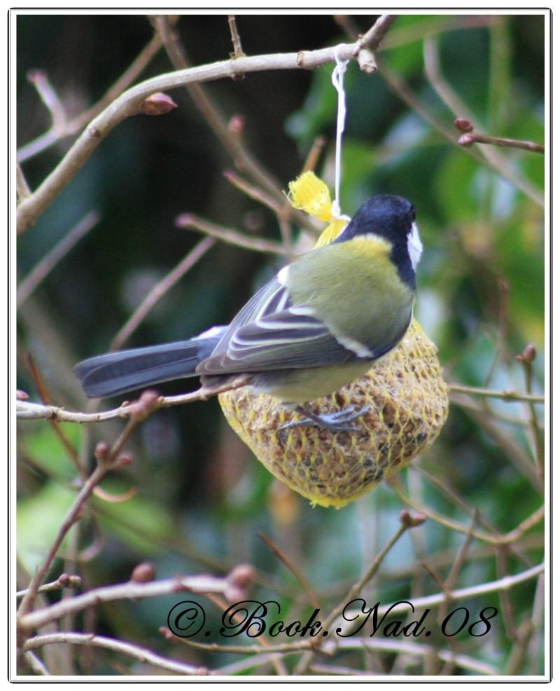 les oiseaux et petites bêtes au cours de nos balades - Page 2 Cadre244