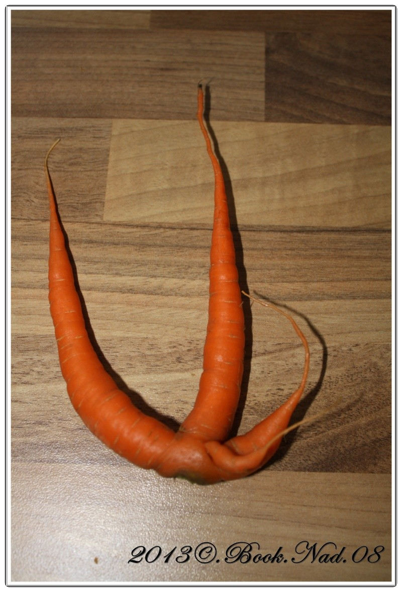 Les carottes Cadre408