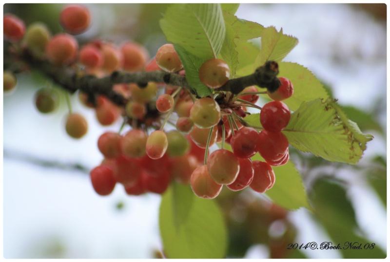 Les cerises Cadre409