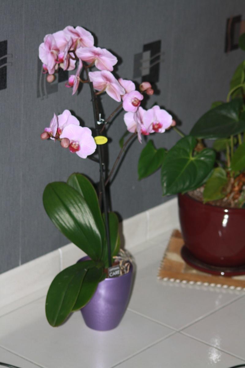 Les Orchidées - Page 5 Img_5518