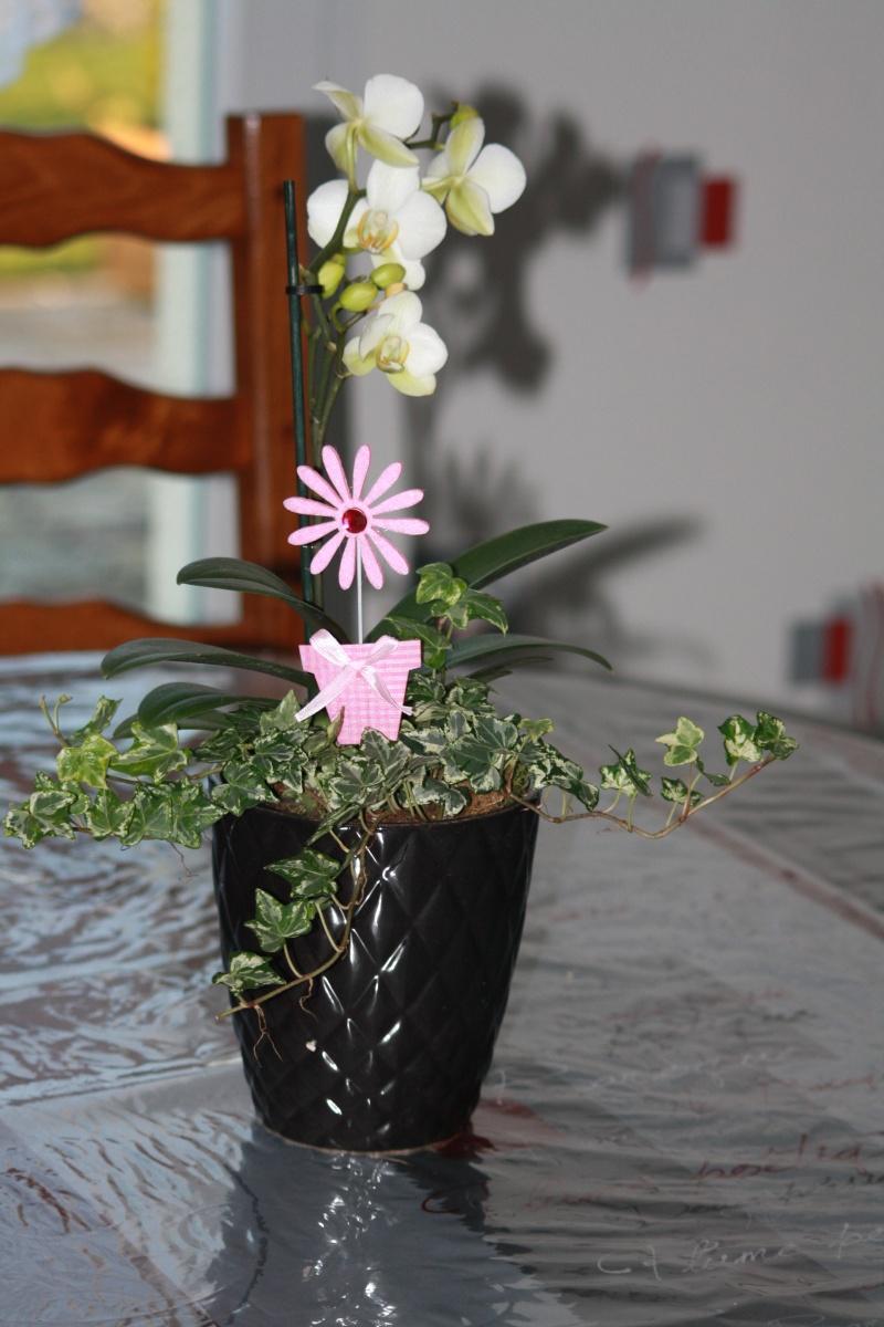 Les Orchidées - Page 5 Img_5519