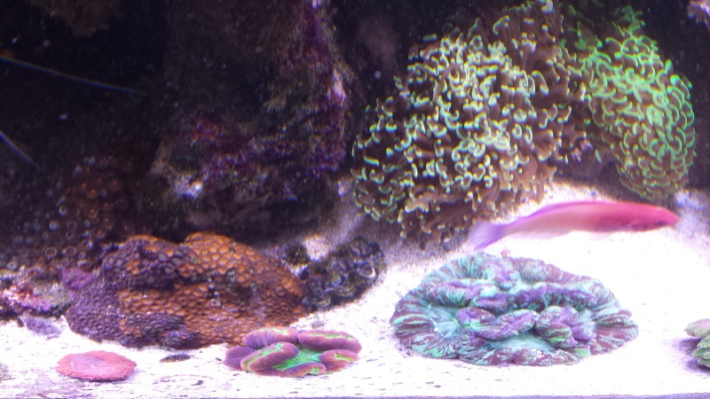 "Mon nouvel aquarium ""david59"" - Page 17 20140220"