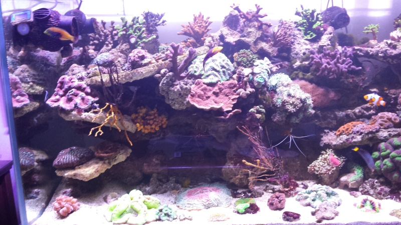 "Mon nouvel aquarium ""david59"" - Page 18 20140511"
