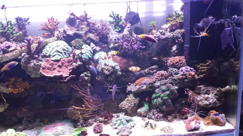 "Mon nouvel aquarium ""david59"" - Page 18 20140512"