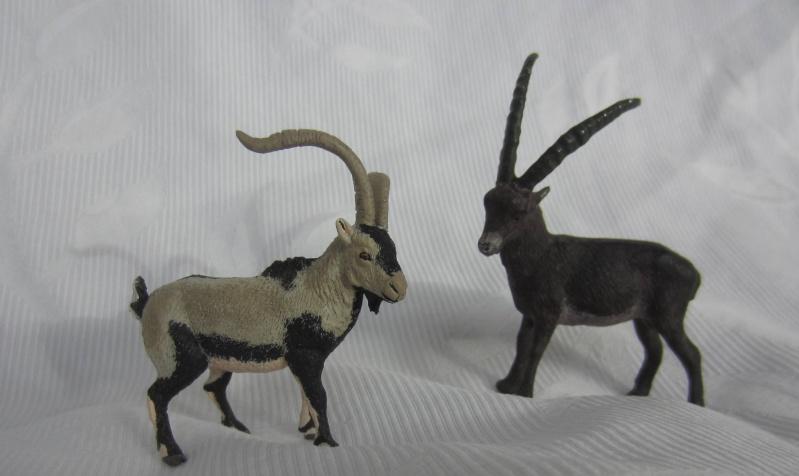 Iberian Ibex by Miguel - Signatus  Img_6710