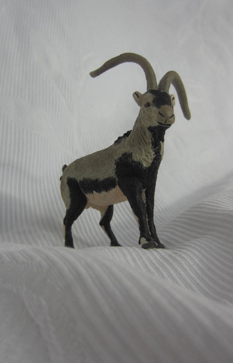 Iberian Ibex by Miguel - Signatus  Img_6812