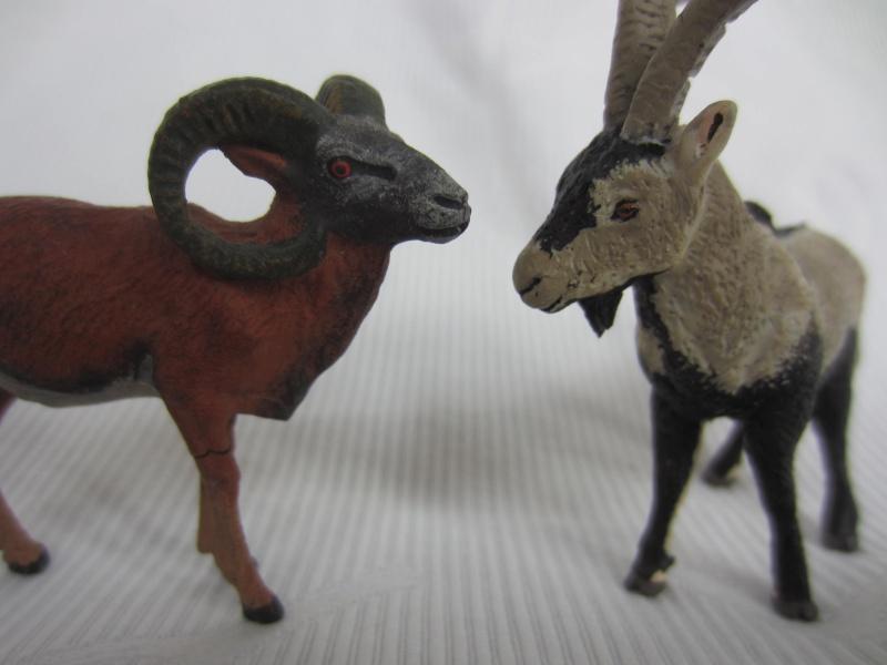 Iberian Ibex by Miguel - Signatus  Img_6817
