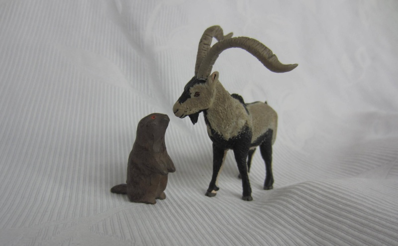 Iberian Ibex by Miguel - Signatus  Img_6819