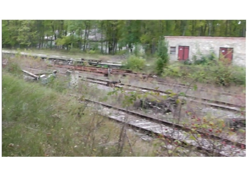 Осенние движения на полигоне ПСС На Юге Украины Ddddnn10