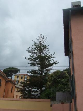 Italie  -  Ligurie, les Cinque Terre - Page 2 Dscf0623