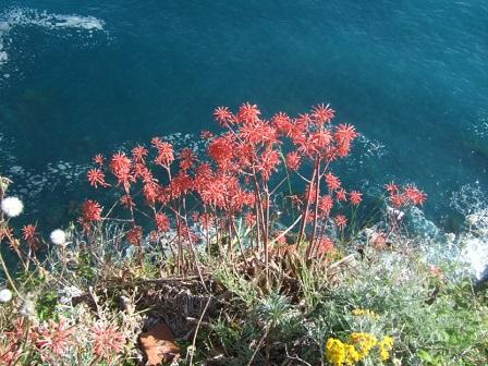 Italie  -  Ligurie, les Cinque Terre Dscf0810