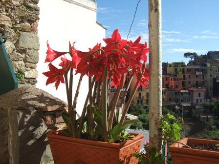 Italie  -  Ligurie, les Cinque Terre Dscf0819